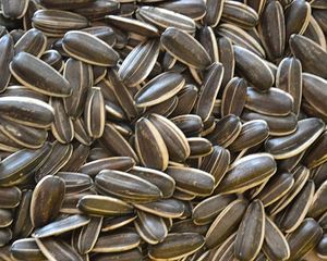 Sunflower seeds 3638